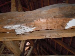 03. Erneuerung des Dachstuhls erforderlich_Holzbock